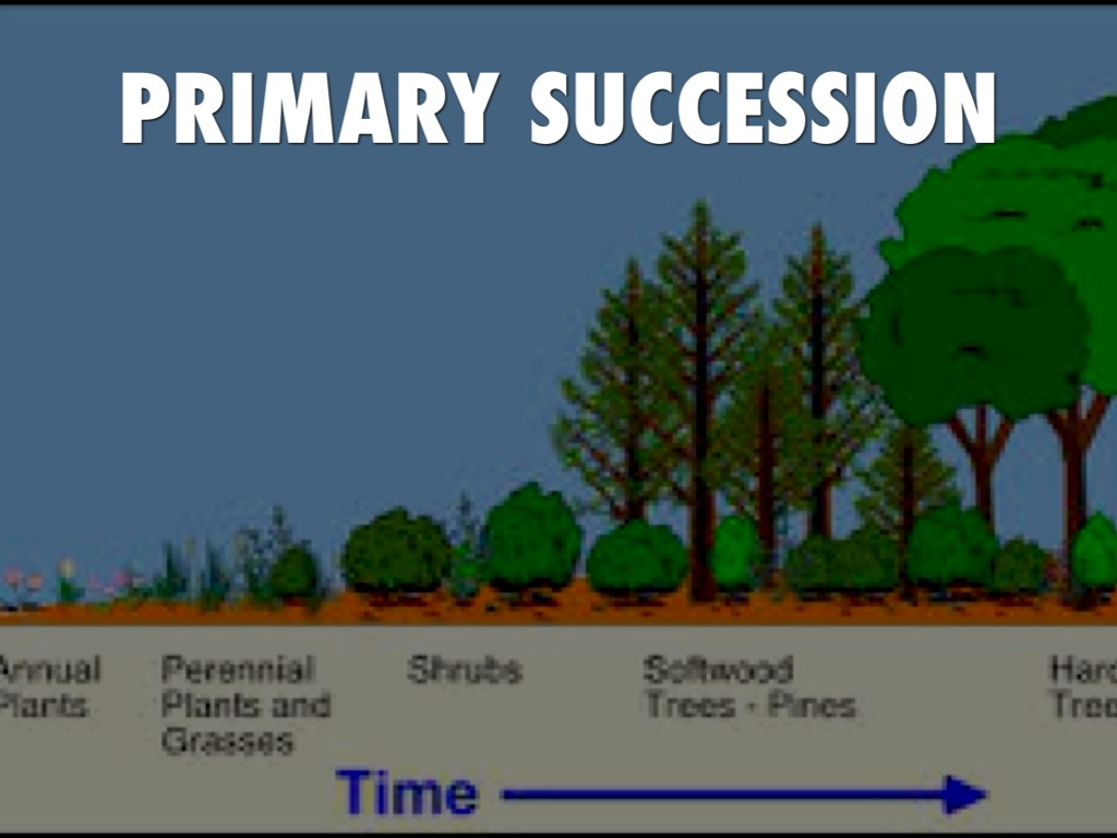 community sucession Ecological succession is the observed process of change in the species  structure of an ecological community over time within any community.