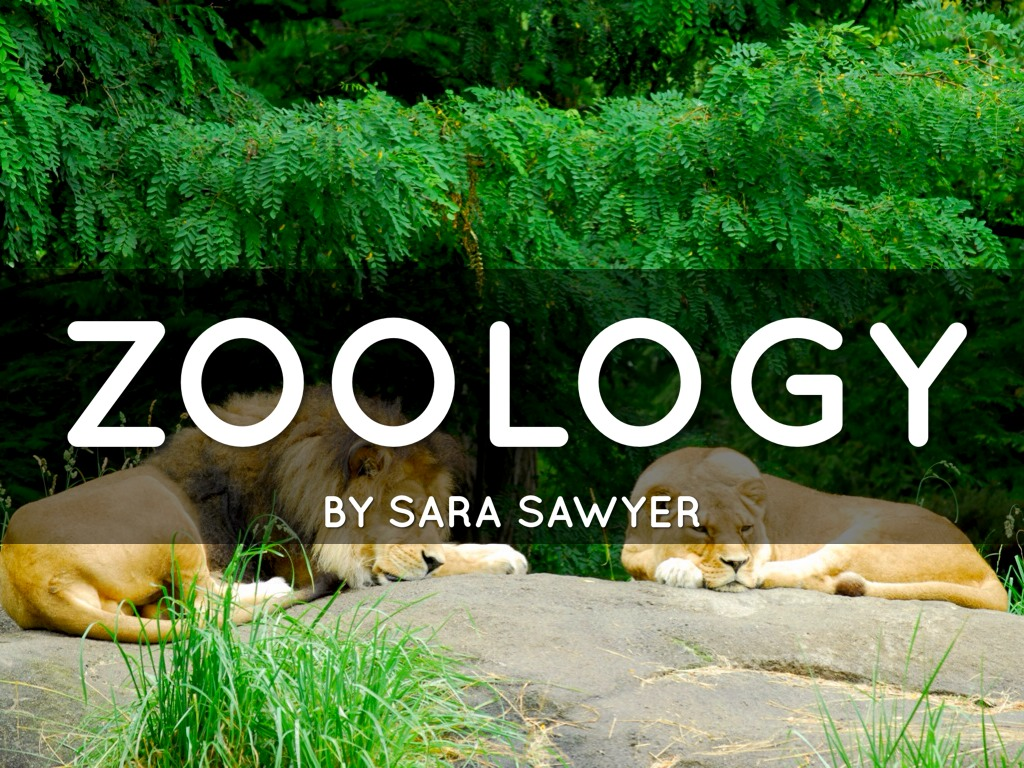 Zoology: The Science and Study of Animals - ThoughtCo