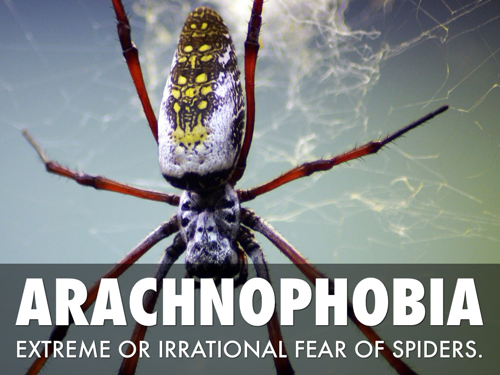 arachnophobia fear of spiders Arachnophobia can be triggered by the mere thought of a spider or even by a picture of one in some cases.