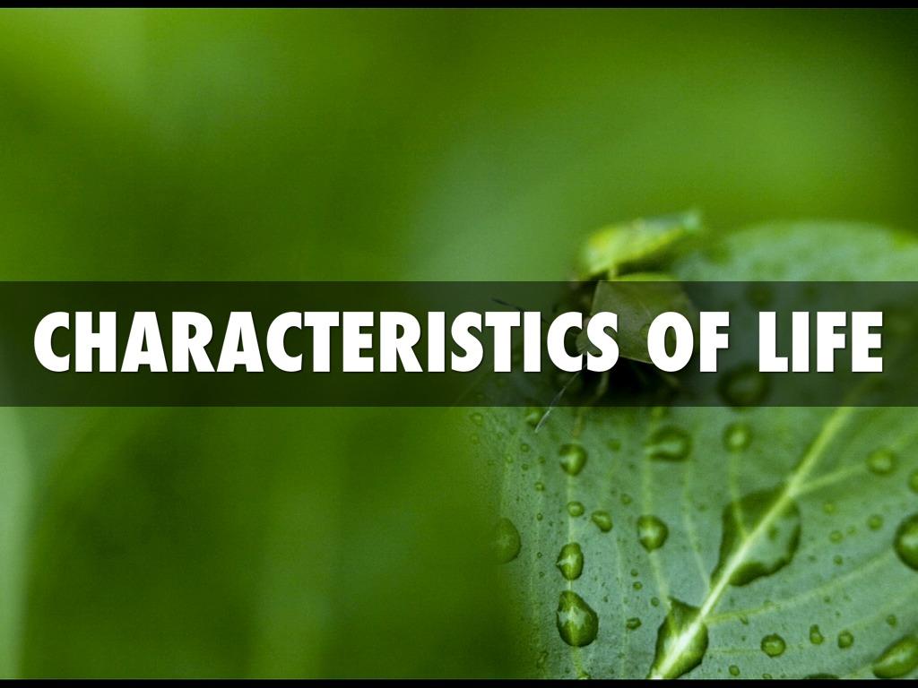 Characteristics Of Life by Danny McNabb