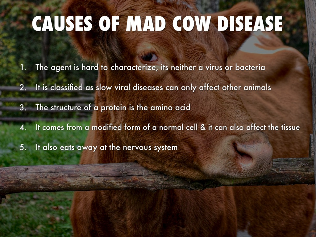 mad cow disease research paper Creutzfeldt-jakob disease (cjd) or mad cow disease the primary nih organization for research on creutzfeldt-jakob disease is the national institute of.