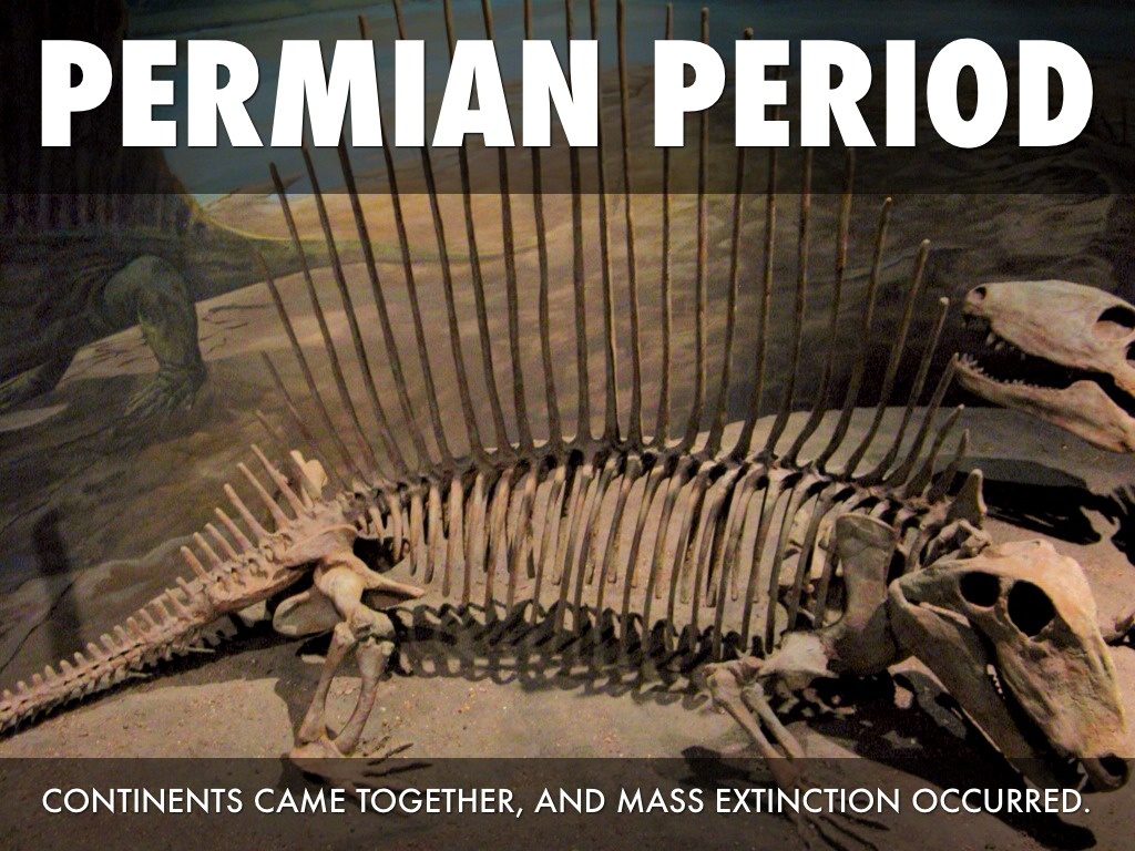 mass extinction in ordivician permian triassic and cretaceous eras History of the world creation of the earth  ordivician-silurian mass extinction  cretaceous-tertiary mass extinction.