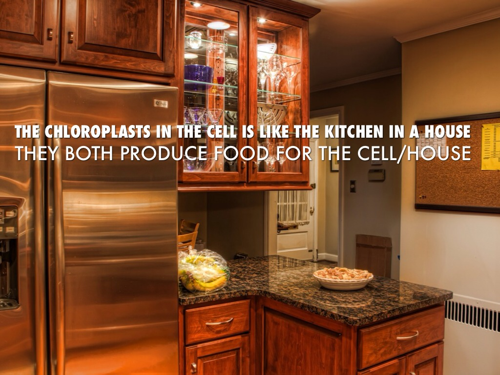 What Is A Kitchen: Cell Analogy Assignment By Payton Meuwissen