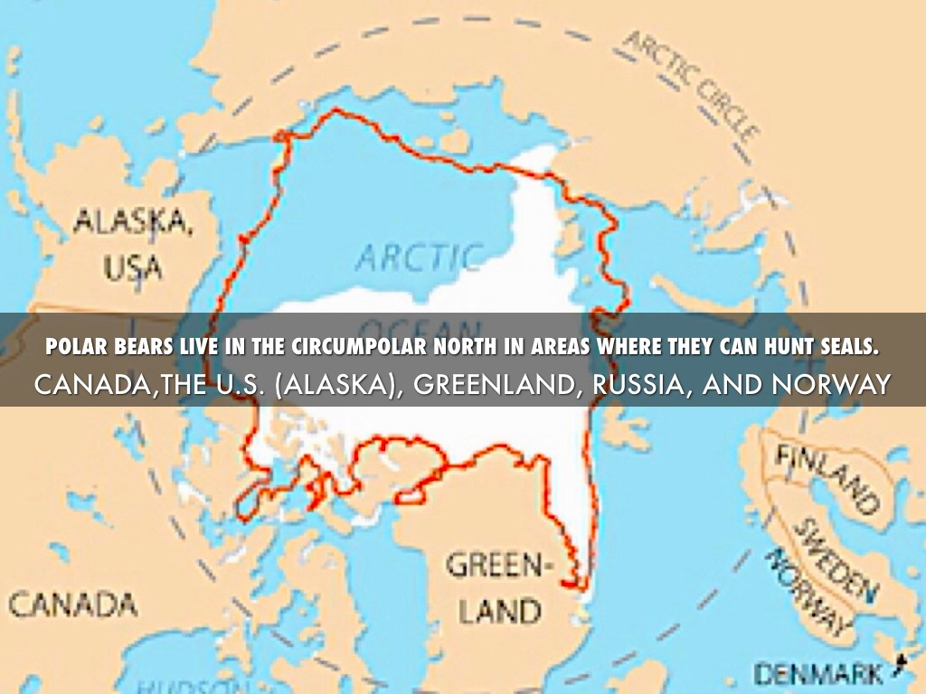 Polar Bear By Angels Guo - Map of where polar bears live