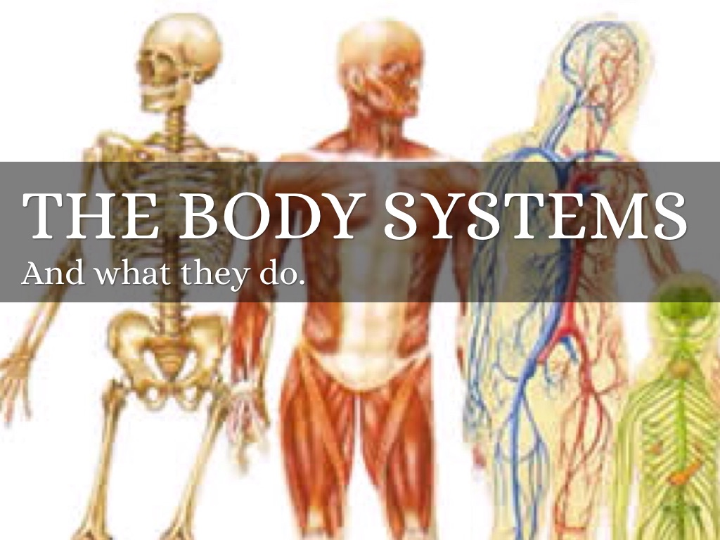 The Body Systems By Halley Subia