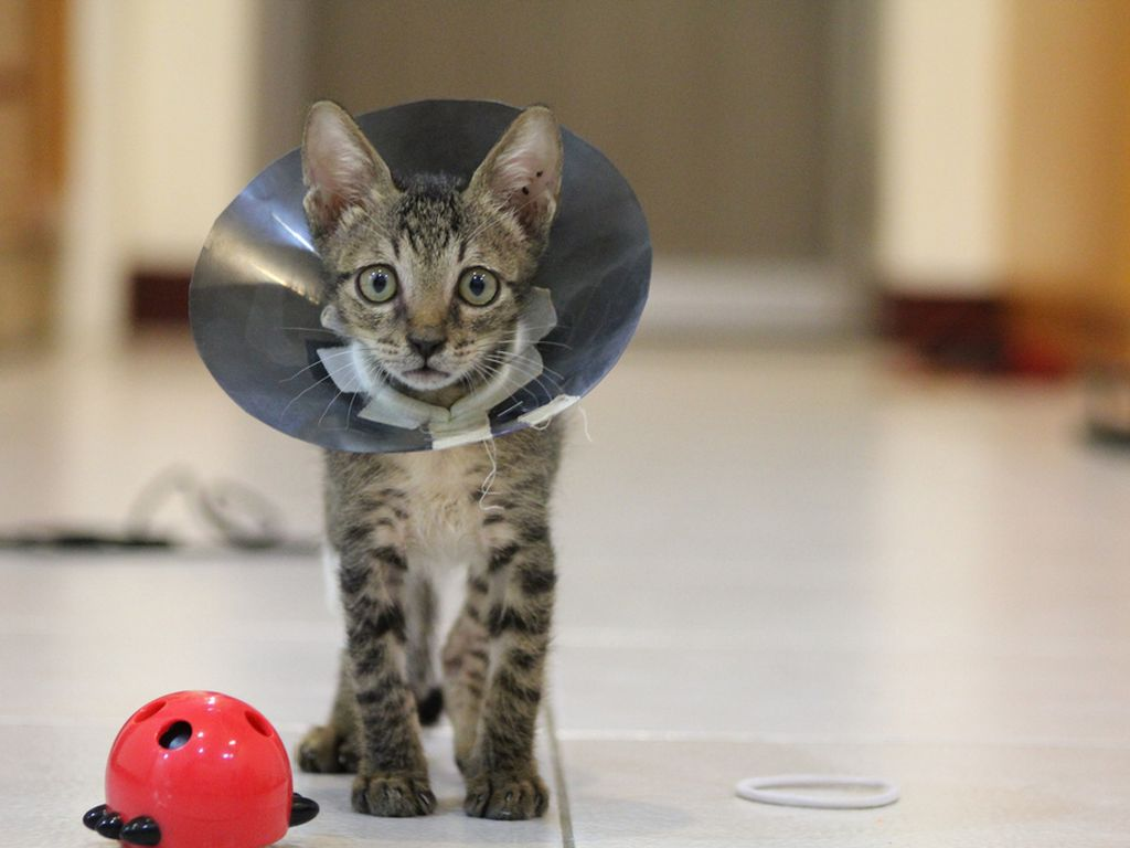 where can you get your cat neutered for free