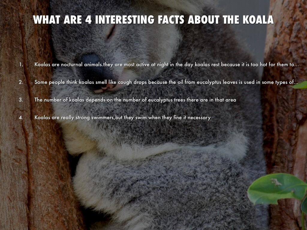 Koalas by Melanie Burford