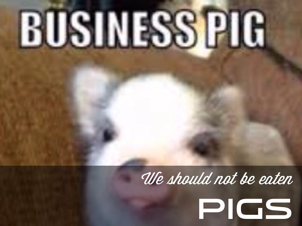 Pig And Pandas