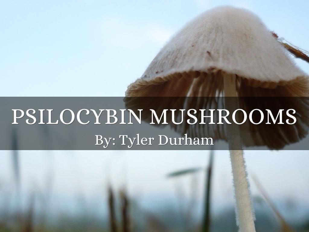 Psilocybin mushrooms by tyler durham psilocybin mushrooms share copy download toneelgroepblik Image collections