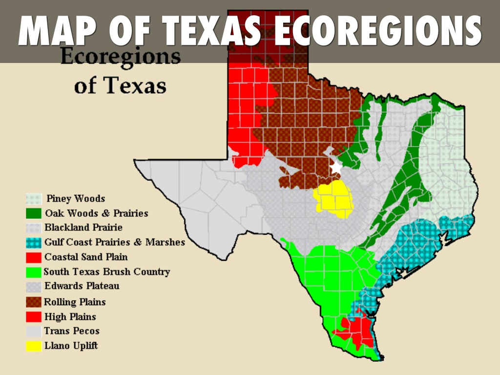 Copy of Texas Ecoregions by Callie Myers