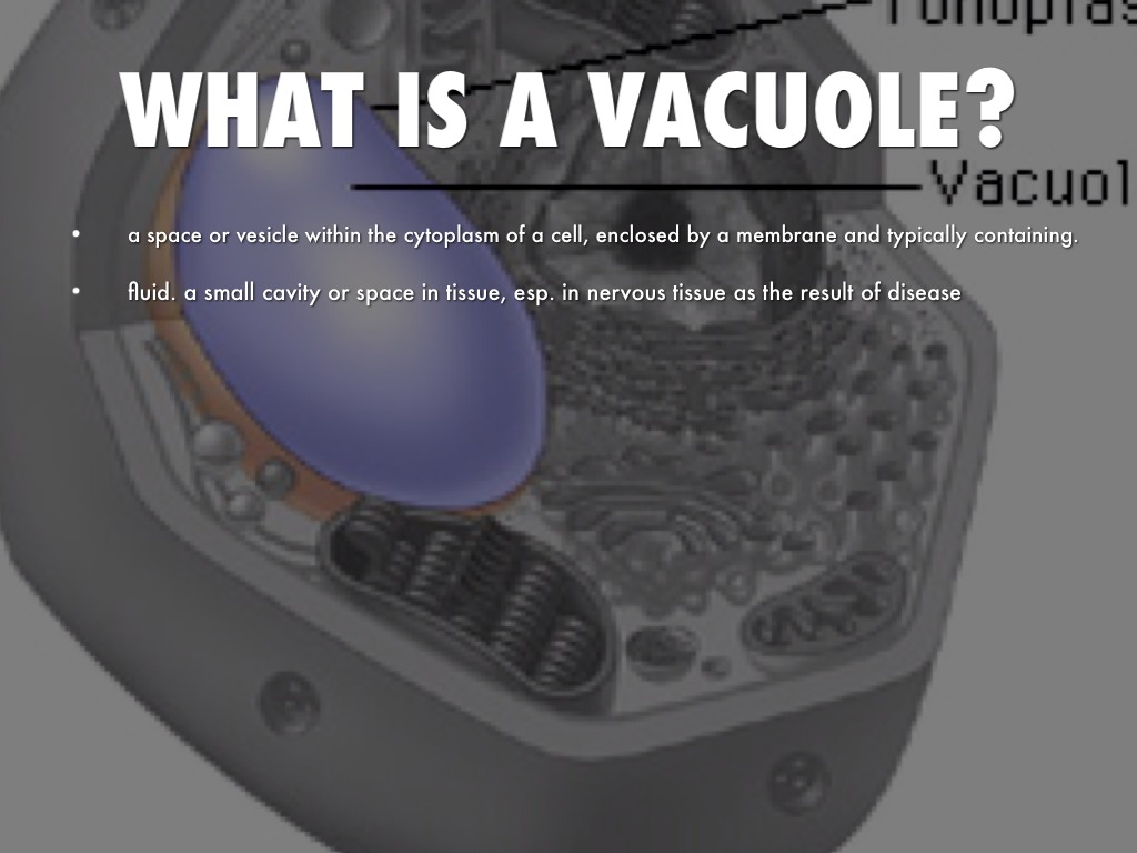 Vacuole By Keegan Biscorner