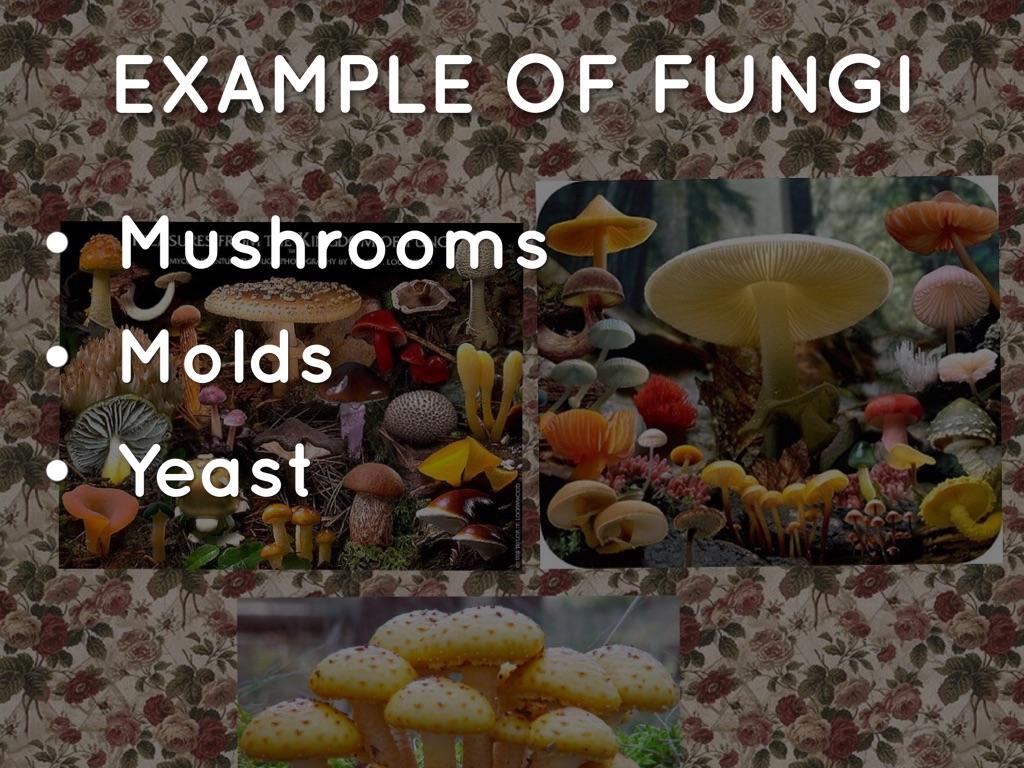 Fungi Kingdom And Protista Kingdom By Esther Dao