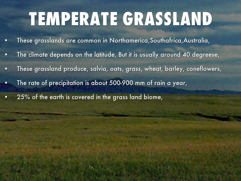 temperate grassland land features