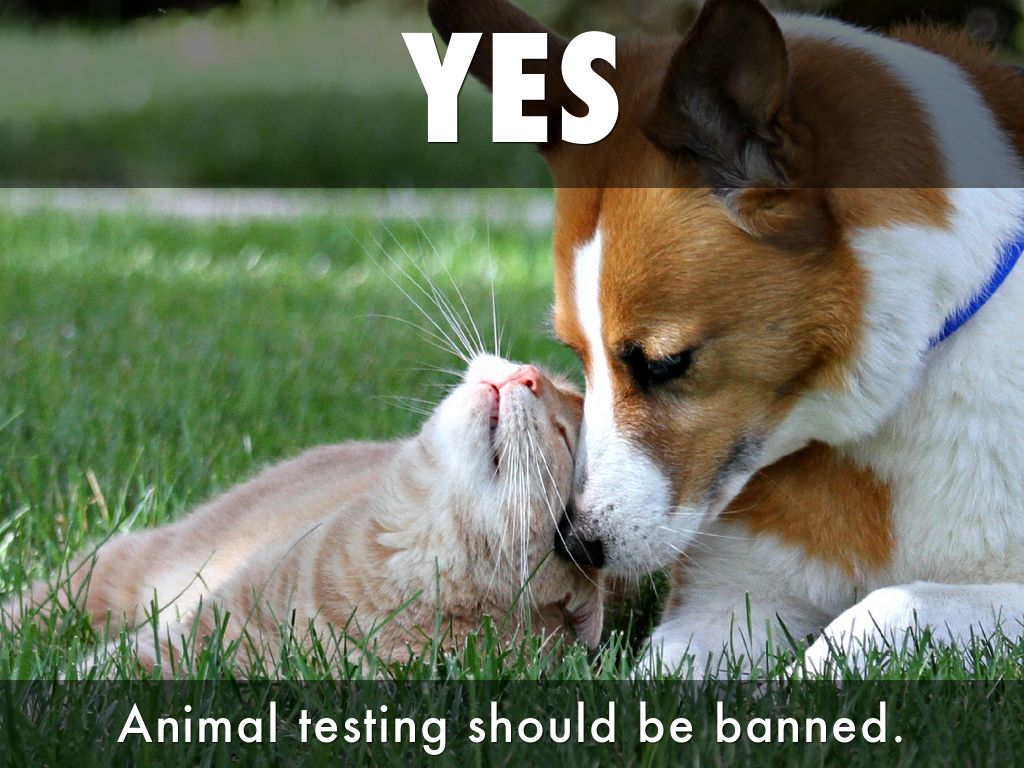 animal testing should not be banned