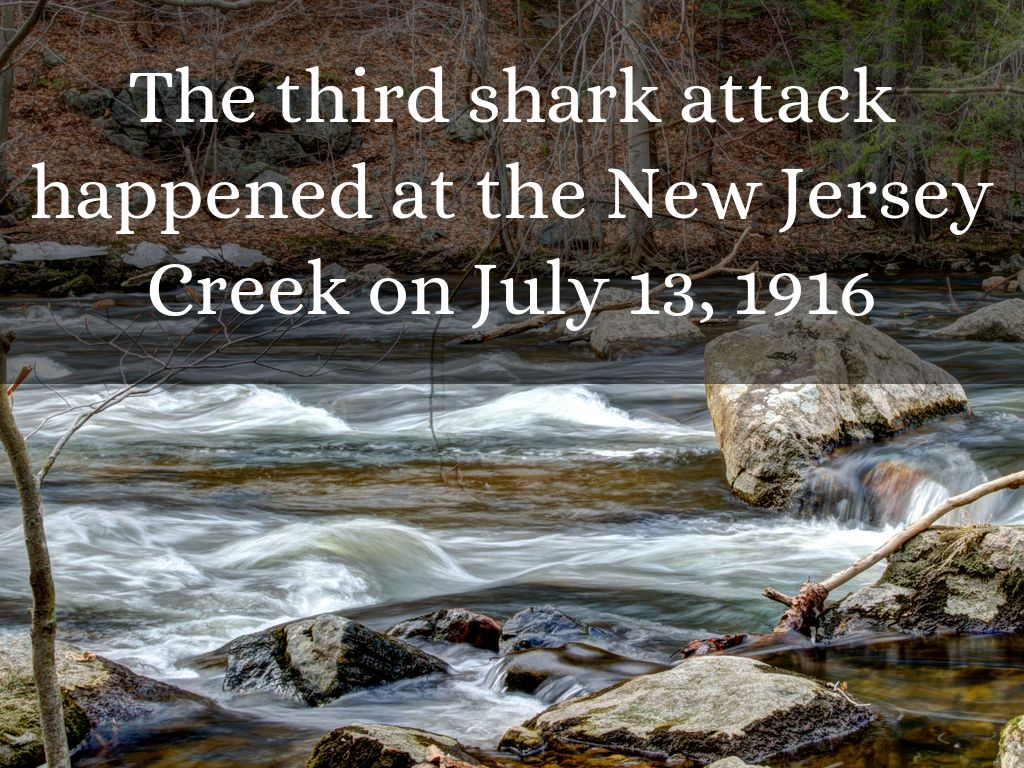 I Survived Shark Attacks of 1916 by s633129
