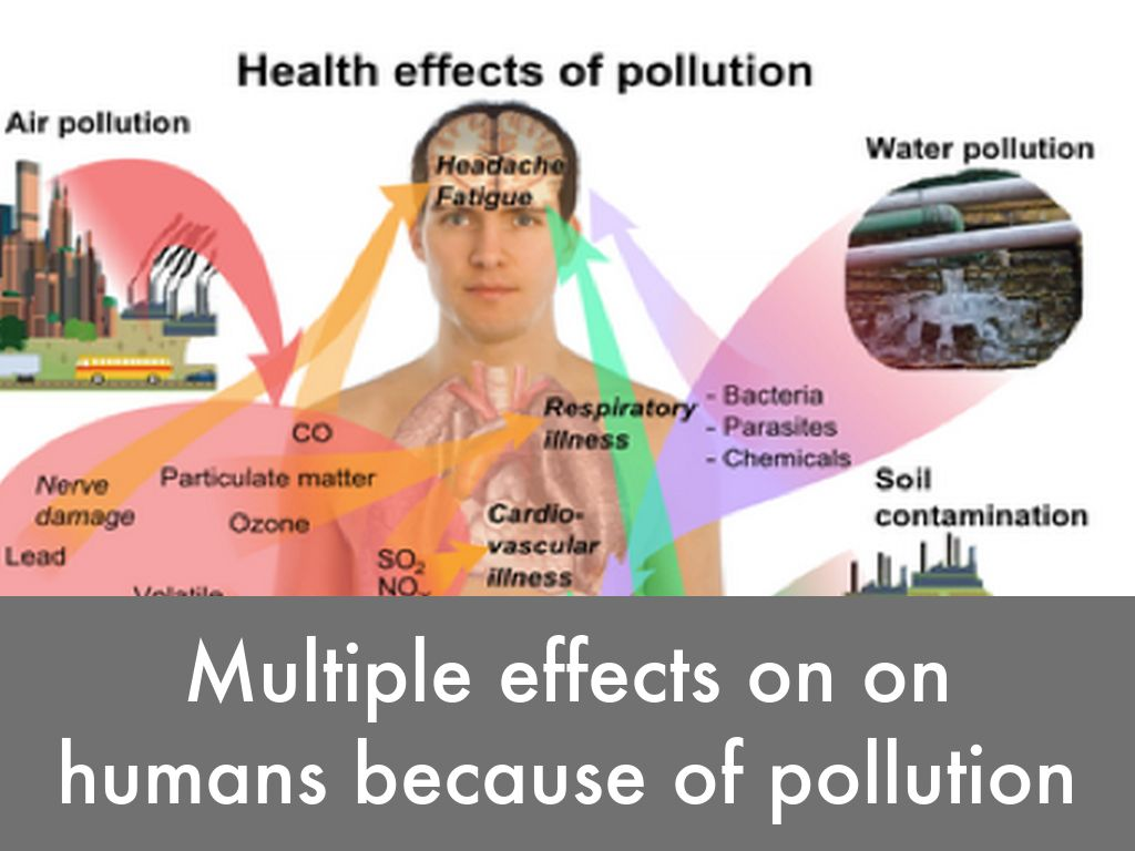 the extent of pollution that affect Effects of soil pollution pollutants in soil, most often from industrial sources, deforestation and improper waste disposal, put animals and plants in pollutants in water resulting from trash, oil spills, sewage spills and run-off from agricultural fields, construction sites and factories affect native plant.