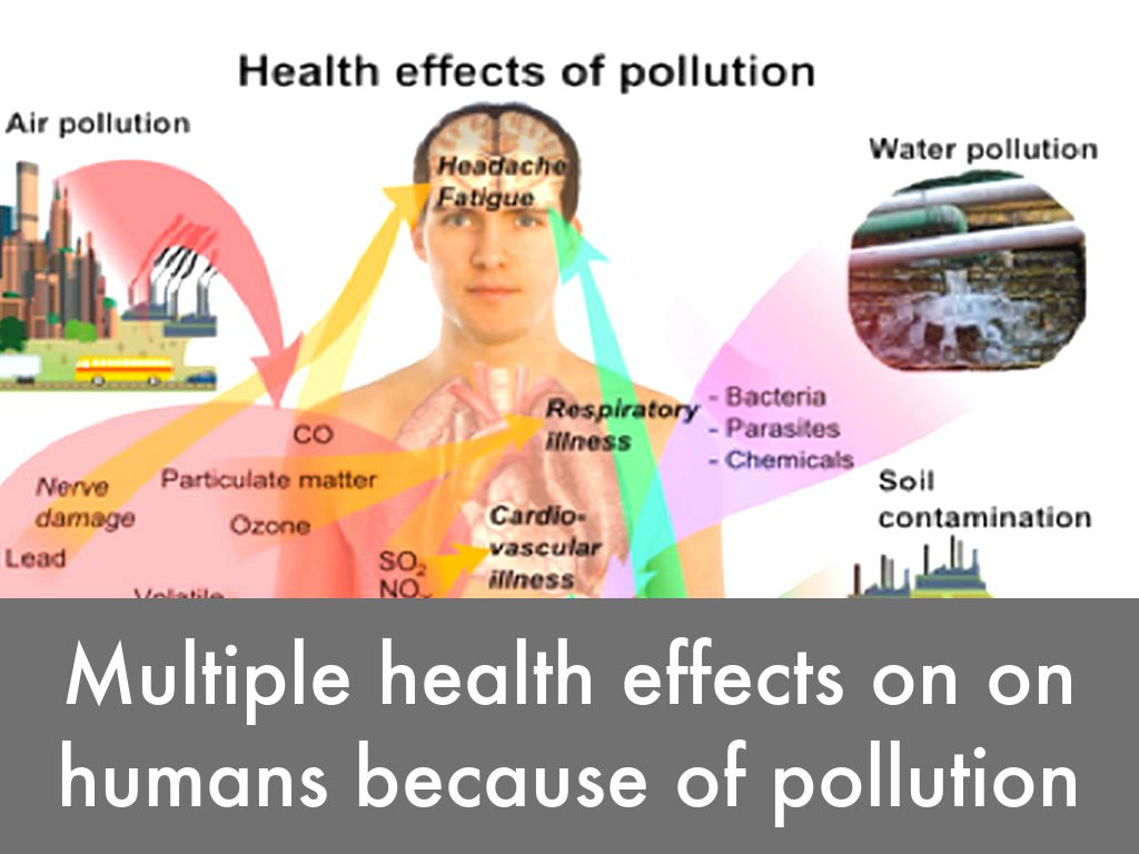 effect of pollution on heritage Effects of acid rain on fish and wildlife the ecological effects of acid rain are most clearly seen in aquatic environments, such as streams, lakes, and marshes where it.