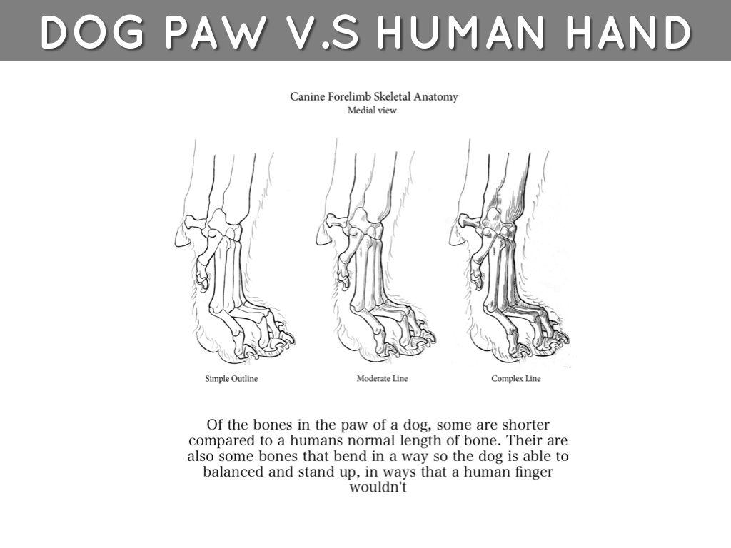 Dog Leg Bone Anatomy Image collections - human body anatomy