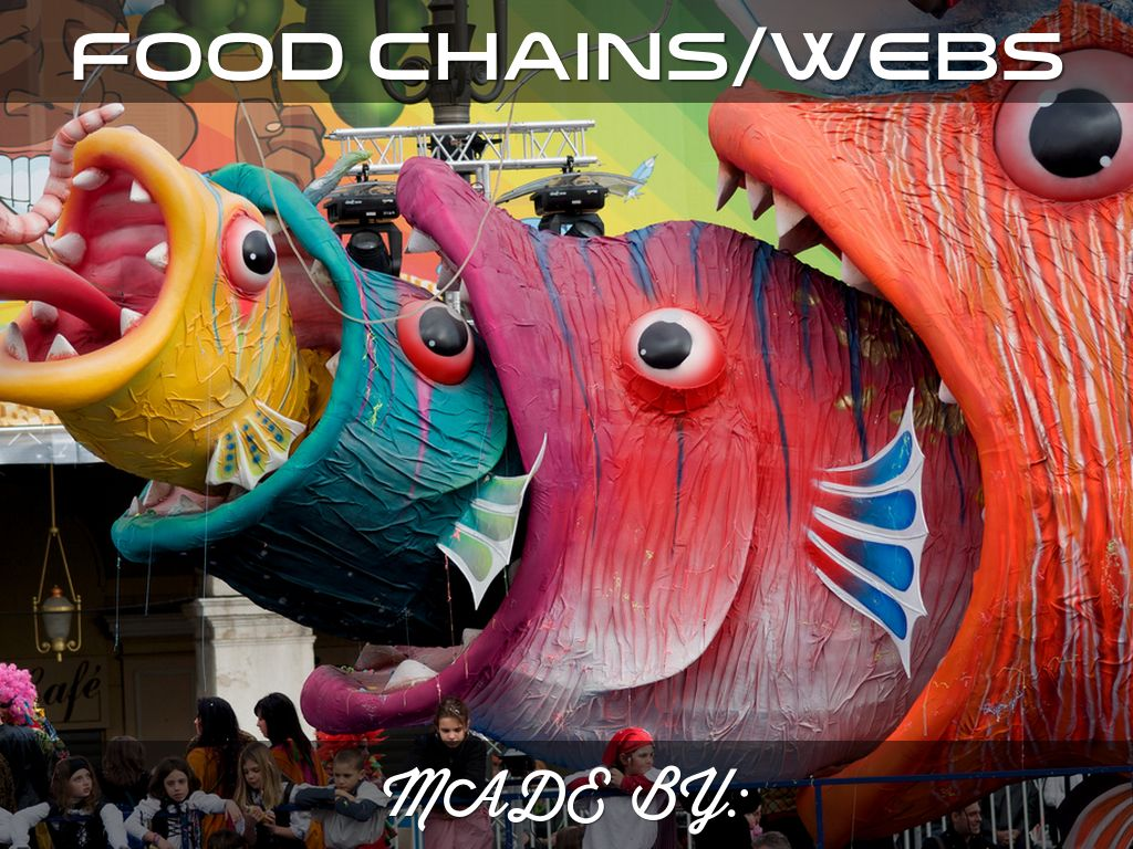 Food Chains/Webs