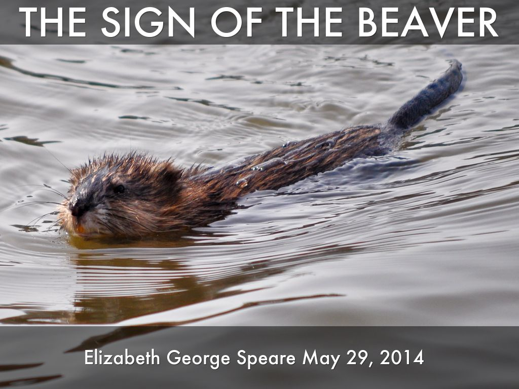 the sign of the beaver by rrodger1