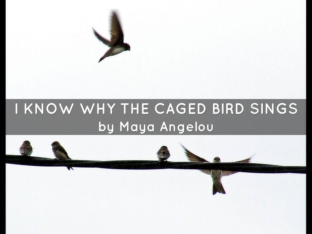 I know why the caged bird sings by fandelatrova i know why the caged bird sings biocorpaavc