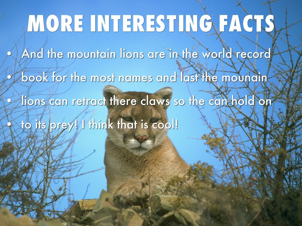 Fun Facts About Mountain Lions - Best Image Of Mountain ... - photo#3
