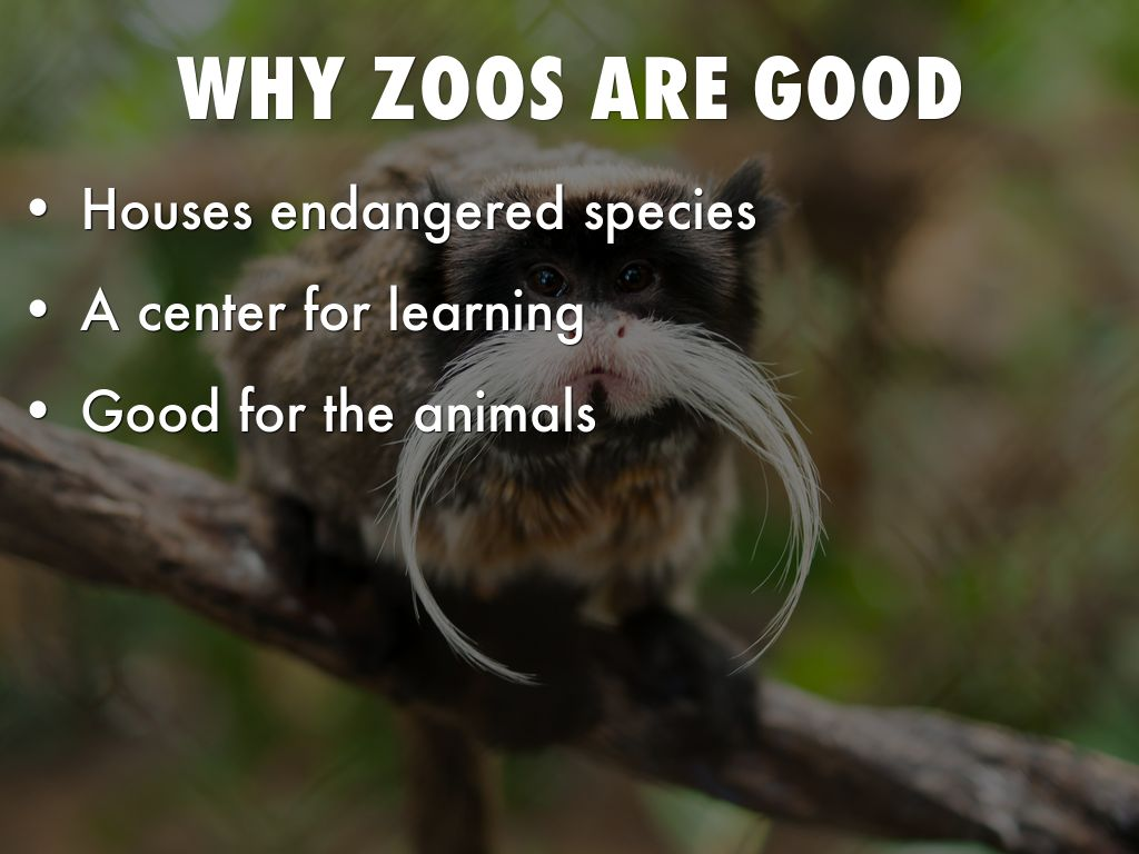 are zoos cruel Despite claims that zoos play an important role in conservation and education, they are unnatural and inherently cruel, effectively doing more harm that good.
