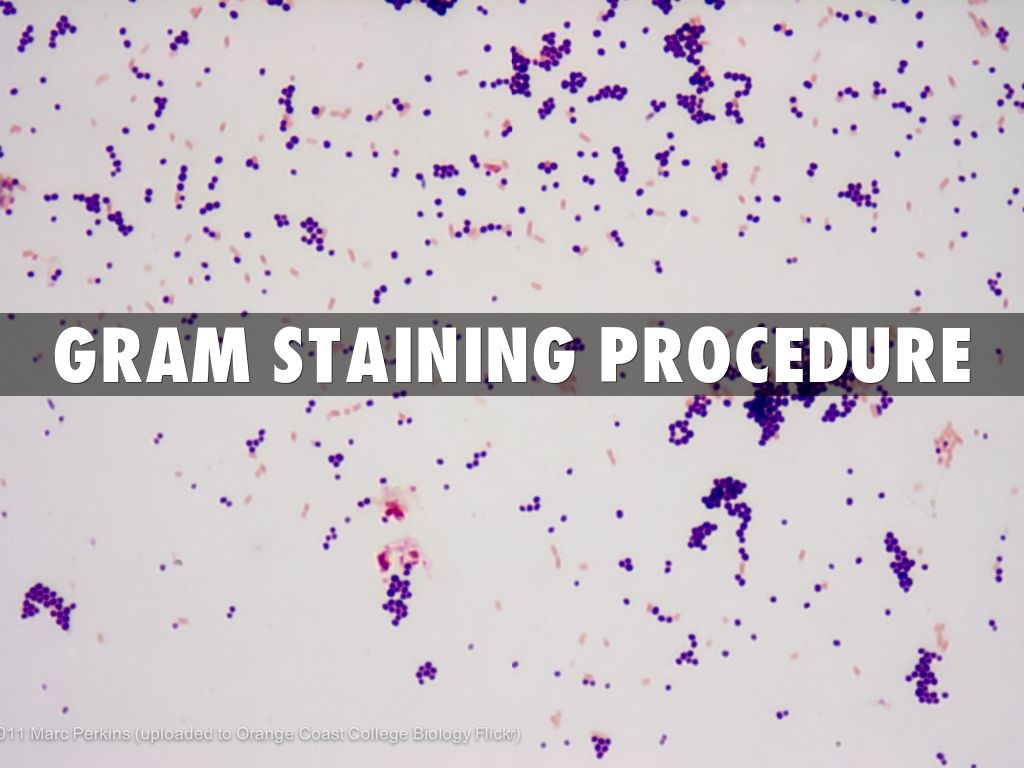 Gram staining procedure