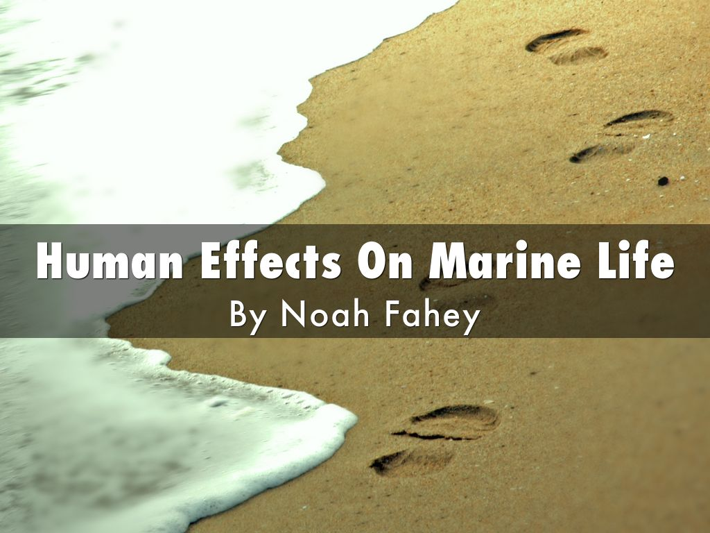 Human Effects On Marine Life by 2and1
