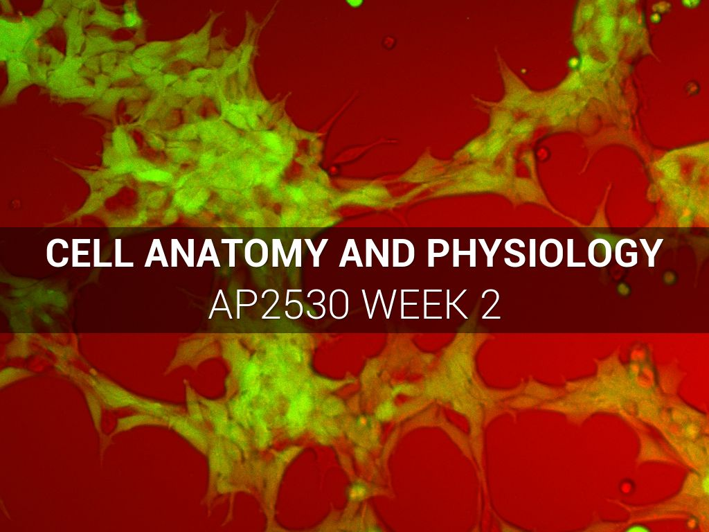 Cell Anatomy and Physiology by Ed Rose