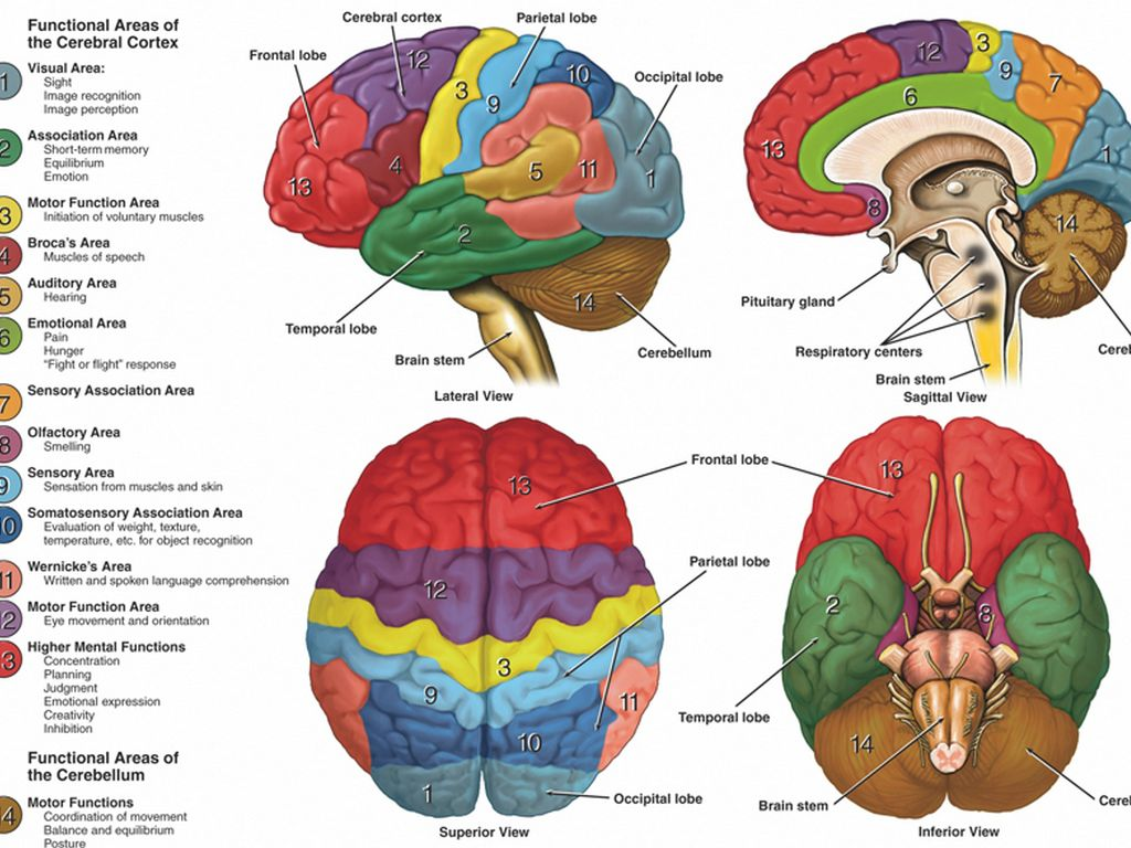 relationship between prefrontal cortex and antisocial behaviour The role of the medial prefrontal cortex in human of the relationship between antisocial behavior and the prefrontal cortex and antisocial.