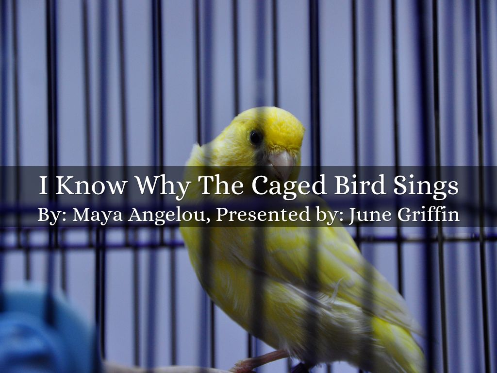 analysis i know why the caged
