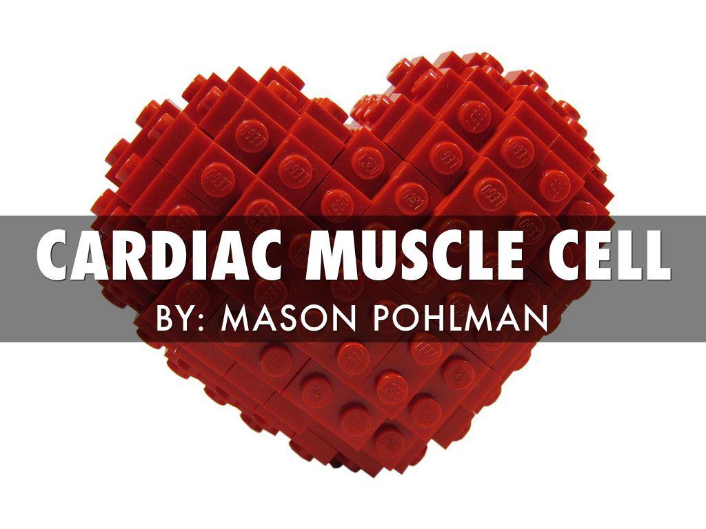 Cardiac Muscle Cell by Mason Pohlman