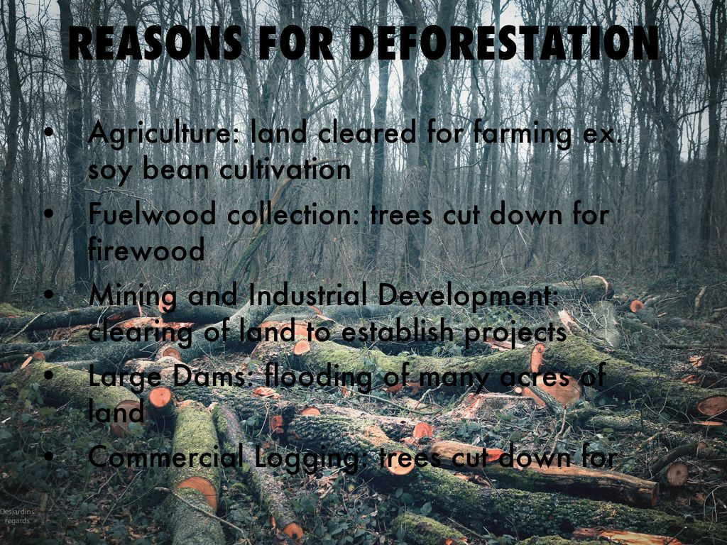 Rainforest Deforestation by Dani Hall
