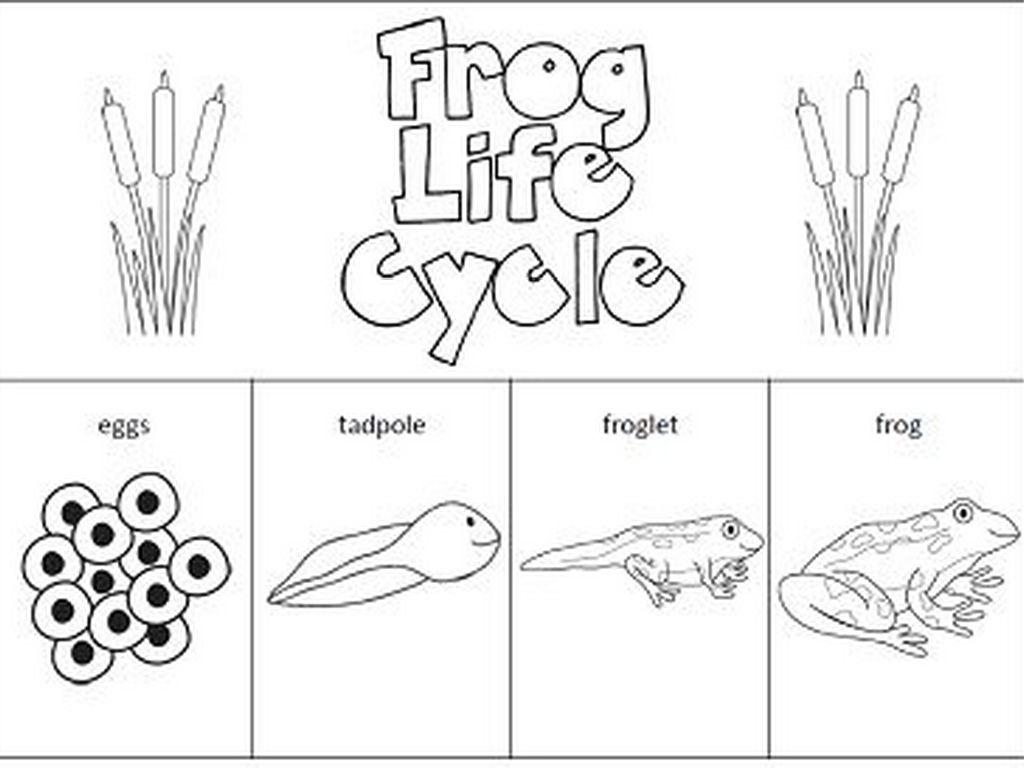 Worksheets Frog Life Cycle Worksheet my son once came home from a birthday party with 34