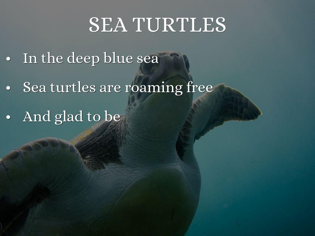 sea animals haikus by 65039