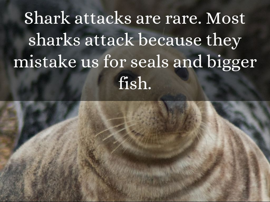 shark attack of 1916 A few years ago, i read an amazing book called close to shore, about an incident i had never heard about: a series of shark attacks on the new jersey shore in 1916, that ended with attacks in a creek miles from the ocean.