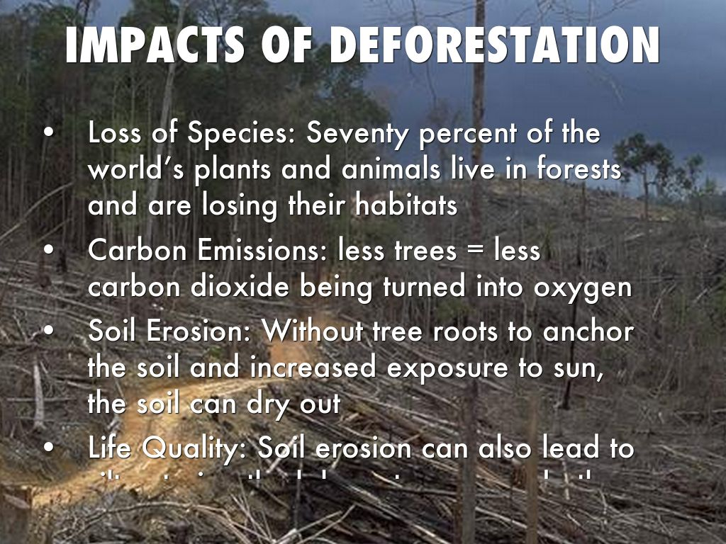 impact of deforestation Iosr journal of environmental science, toxicology and food technology (iosr-jestft) e-issn: 2319-2402,p- issn: 2319-2399 volume 4, issue 2 (may - jun 2013), pp 24-28 wwwiosrjournalsorg impact of deforestation on climate change mrs archana k assistant professor in law, kslu's law school.