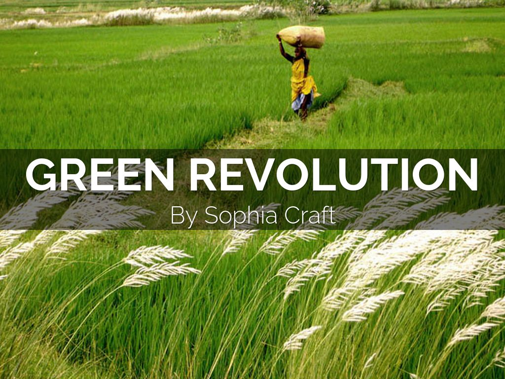 green revolution in india The introduction of high-yielding varieties of seeds after 1965 and the increased  use of fertilizers and irrigation are known collectively as the green revolution,.