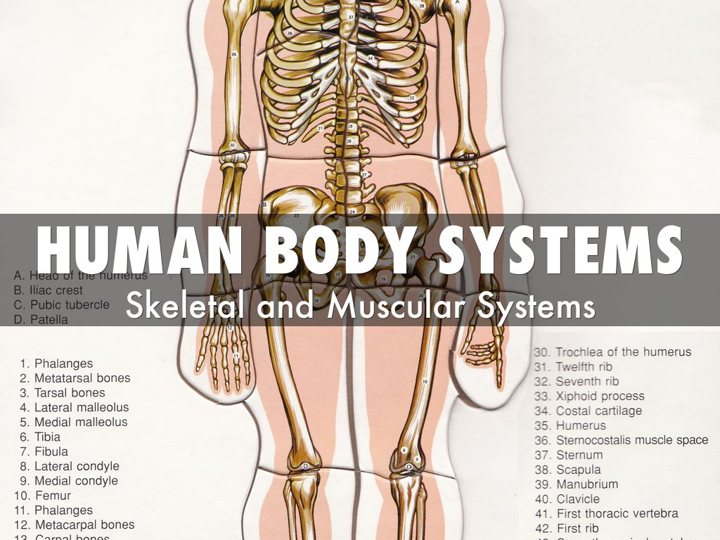 Human Body Systems by sebastian.achury77