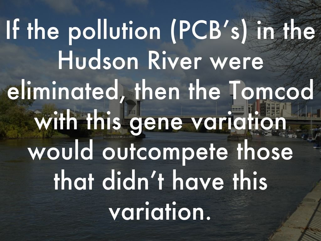 an analysis of the hudson river and pcb pollution What's being done to address the contamination in february 2002, the epa issued a record of decision (rod) for the hudson river pcbs superfund site that called for targeted environmental dredging of approximately 265 million cubic yards of pcb-contaminated sediment from a 40-mile section of the upper hudson river from fort edward to troy, ny.