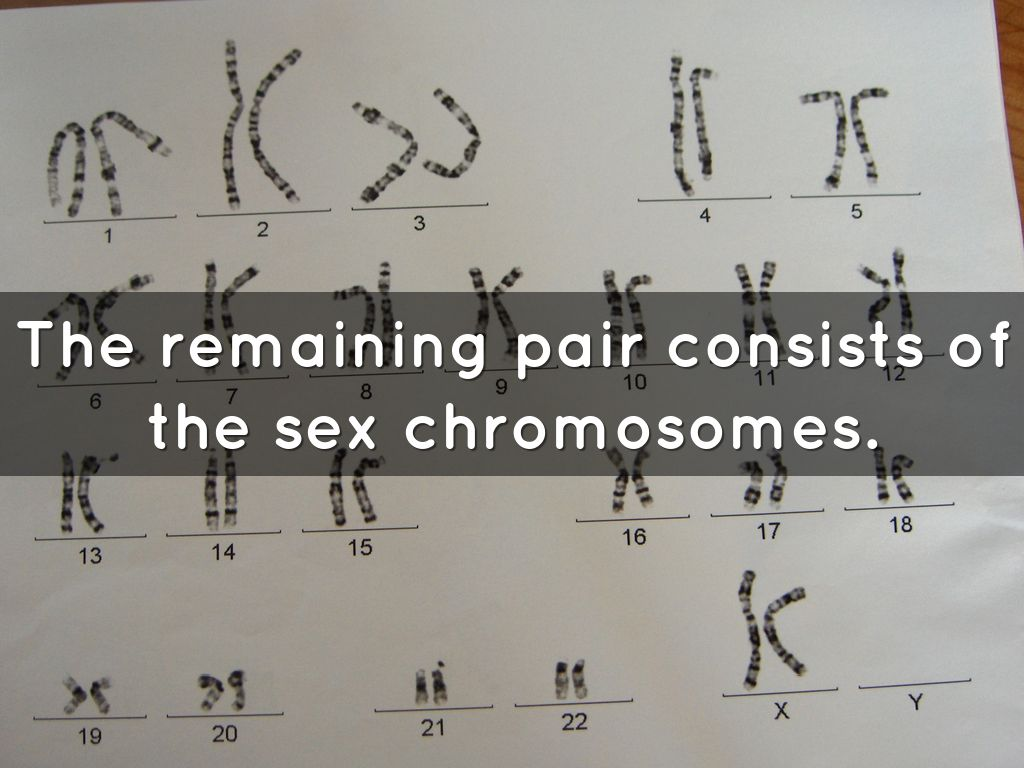 sex linked genes reside on sex chromosomes x in humans in Fontana