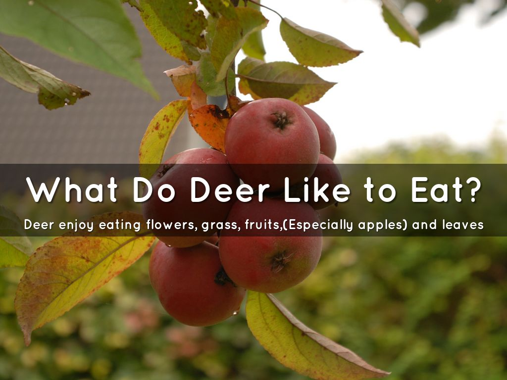 Deer By Bridget