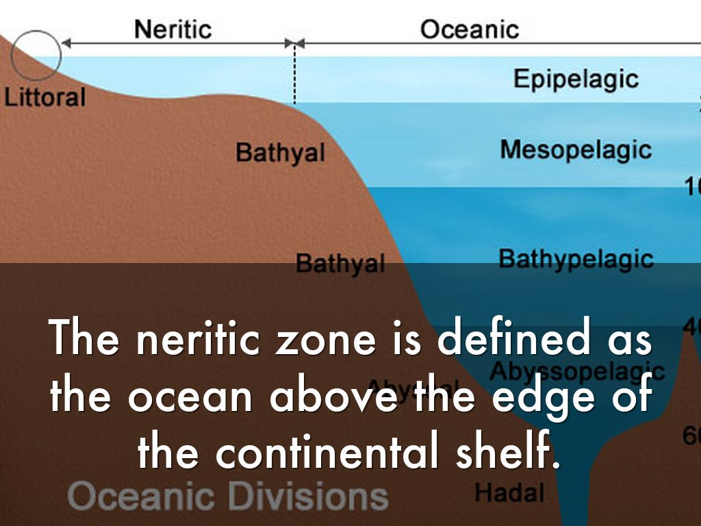 neritic zone Neritic zone, shallow marine environment extending from mean low water down to 200-metre (660-foot) depths, generally corresponding to the continental shelfneritic waters are penetrated by varying amounts of sunlight, which permits photosynthesis by both planktonic and bottom-dwelling organisms.
