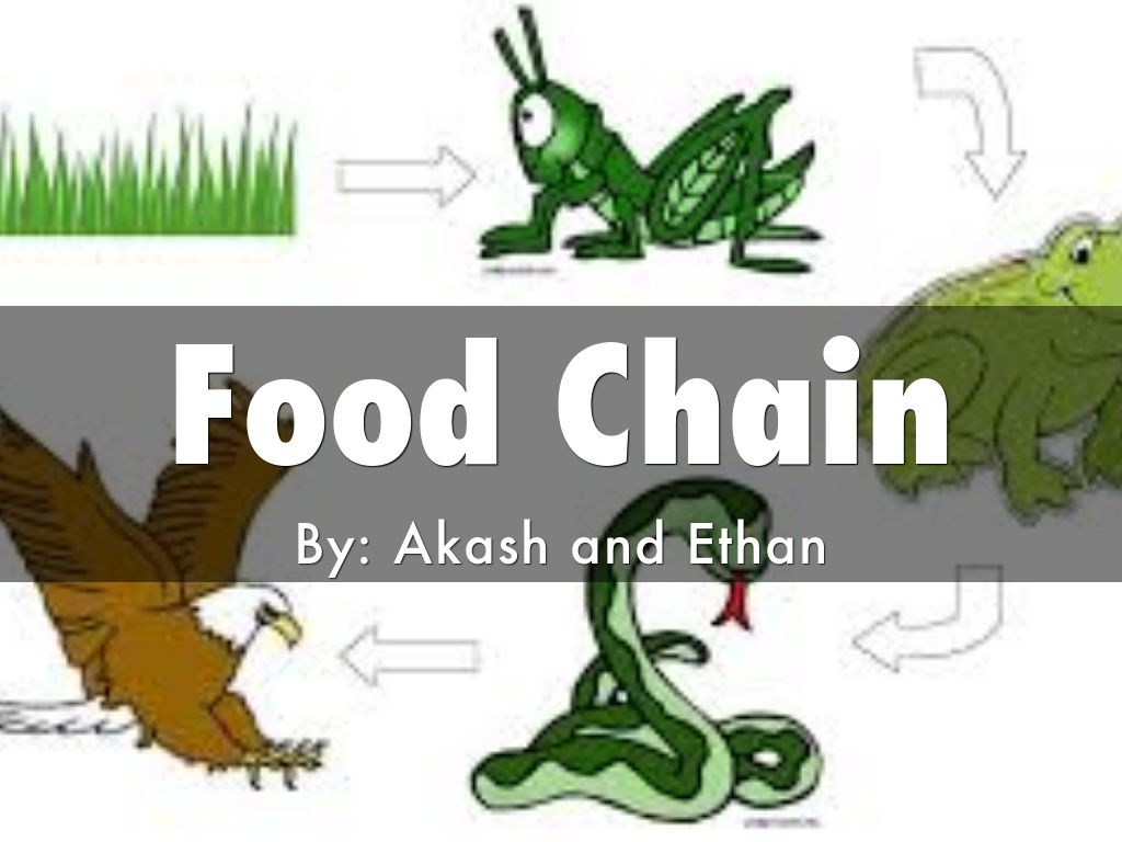 food chain by titanim zane2002