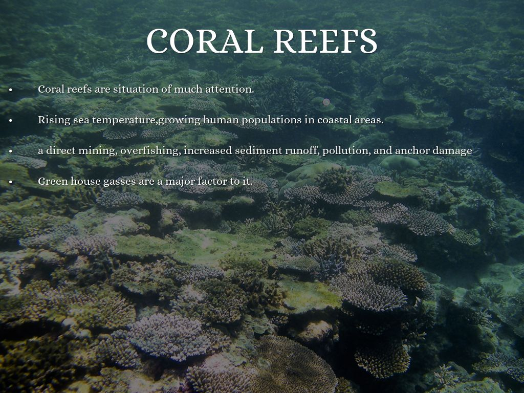 The role of coral reefs