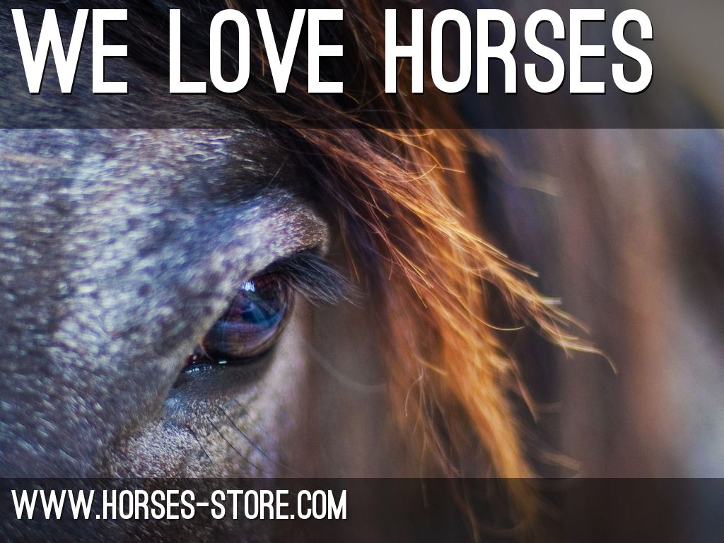 Horses-store