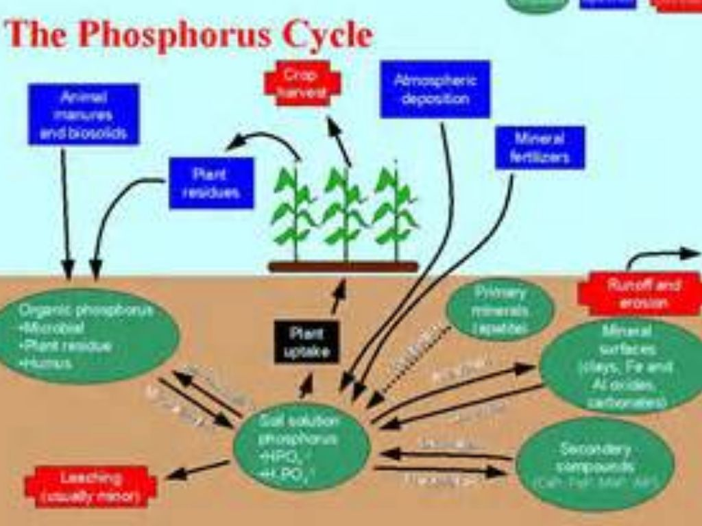 Px Carbon Cycle Cute Diagram Svg additionally Quiz Worksheet Summary And Types Of Air Pollution additionally Carboncyclec further Figure moreover L Cycling. on water carbon and nitrogen cycle worksheet