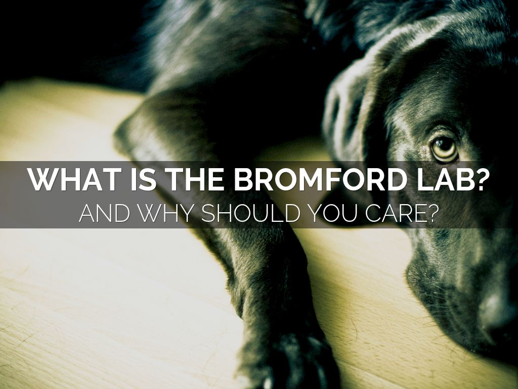 What Is The Bromford Lab? And Why Should You Care?