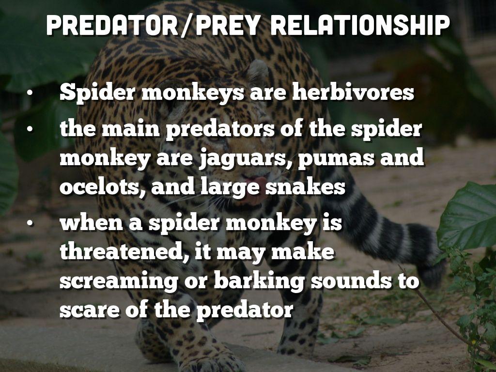 predator prey relationship